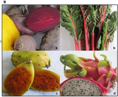 Betanin – a food colorant with biological activity - Esatbeyoglu - Molecular Nutrition & Food Research - Wiley Online Library | plant cell genetics | Scoop.it