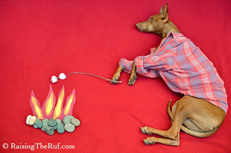 Snoozing hound dreams big in magical nap scenes | xposing world of Photography & Design | Scoop.it