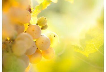 Comment les bactéries font de la biorésistance face au cuivre | Le Vin et + encore | Scoop.it