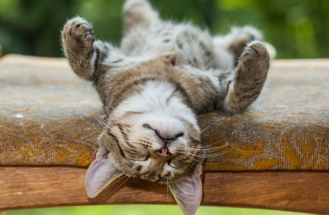 The best sleeping habits to enhance your productivity | Technological Sparks | Scoop.it