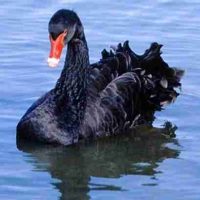 Black Swans and why History, Future. Now is not bleak | Nassim Nicholas Taleb | Scoop.it