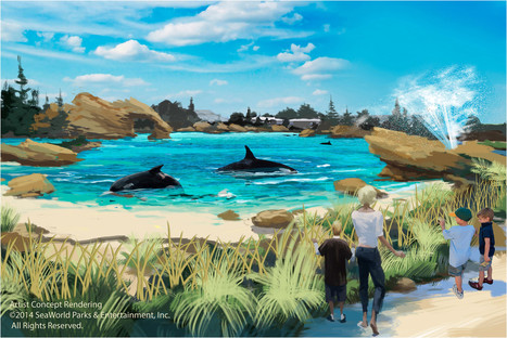 #SeaWorld to expand #Orca habitat at its parks ~ #Captivity is unNatural ! | Rescue our Ocean's & it's species from Man's Pollution! | Scoop.it