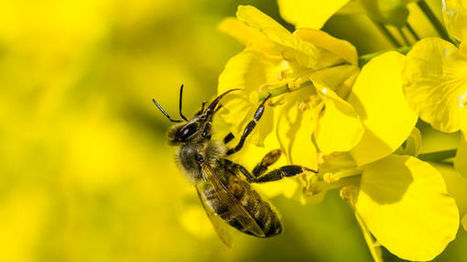 Agir contre le réchauffement climatique peut aussi nuire à la biodiversité - France inter | Le Fil @gricole | Scoop.it