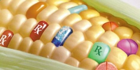 Study proves BT toxins in GMOs are toxic to mammalian blood | Health Supreme | Scoop.it