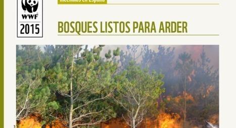 El monte español es cada vez más vulnerables a los incendios *   Nuevas Geografías   Scoop.it