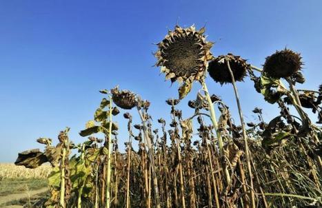 Balkans: une sécheresse sans précédent frappe gravement l'agriculture | Questions de développement ... | Scoop.it