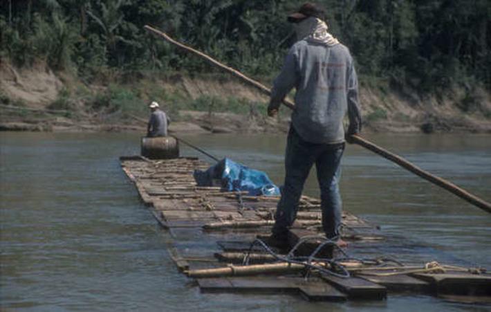 Pérou : des bûcherons illégaux expulsés du territoire des Indiens isolés isconahua | Survival International | Amériques | Scoop.it