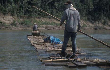 Pérou : des bûcherons illégaux expulsés du territoire des Indiens isolés isconahua | Survival International | Kiosque du monde : Amériques | Scoop.it