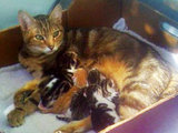 Cat gives birth to kittens inside rotating tumble dryer | Responsible Pet Parenting | Scoop.it