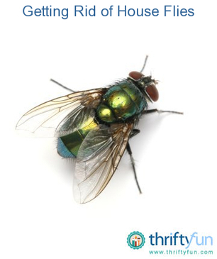 Getting Rid of House Flies | Effective Ways to Control Fly | Scoop.it