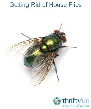 Getting Rid of House Flies | Get Rid Of Flies | Scoop.it