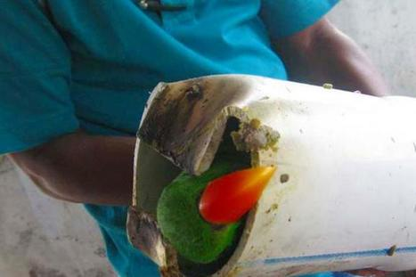 Parrot Smuggling Foiled in Indonesia | All Things Zygodactyl | Scoop.it