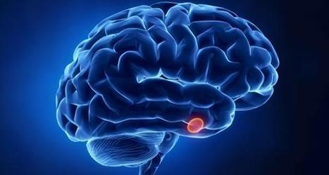 Revealed -- how brain training improves multitasking skills - TheHealthSite | Research skills for students | Scoop.it