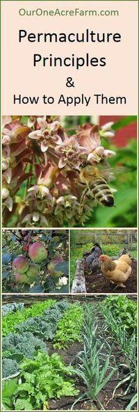 plants | Tuinieren | Scoop.it