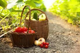 Pays méditerranéens : La gouvernance des systèmes alimentaires - El Moudjahid   Agriculture et Alimentation méditerranéenne durable   Scoop.it