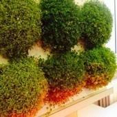 Con HOH! appendi il verde in casa | Mangialafoglia | Scoop.it