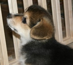 Finding the Best Girl Dog Names   Interesting Names   Boys, Girls, Last Names and Pets   Scoop.it