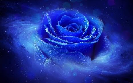 Cool Blue Rose Darkness 1280x800 HD Love Desktop Wallpaper Backgrounds | Cool HD & 3D Wallpapers - Free Download | Scoop.it