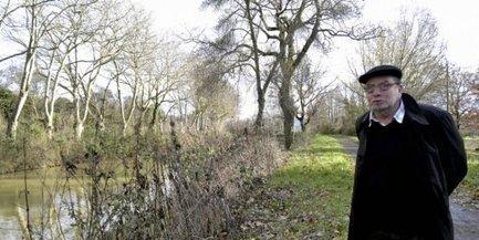 Villedubert : 19 platanes seront abattus le long du canal | Histoire Canal du Midi | Scoop.it