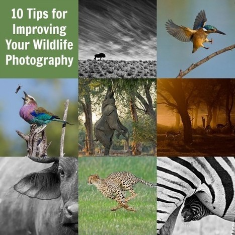 10 Tips for Improving Your Wildlife Photography - Digital Photography School | Everything Photographic | Scoop.it