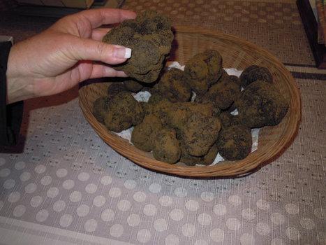 Le marché de Richerenches lance la saison des truffes en France   Chronique d'un pays où il ne se passe rien... ou presque !   Scoop.it
