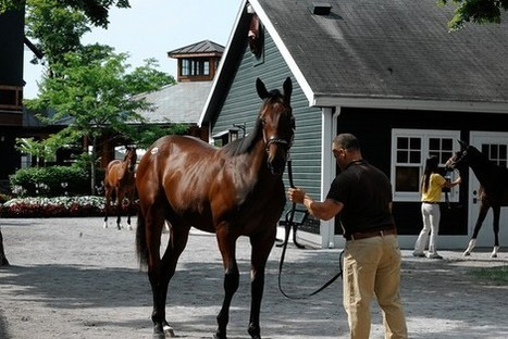 National horse-breeding industry has contracted, but demand at auction for NY bred horses has grown dramatically | Horse Racing News | Scoop.it