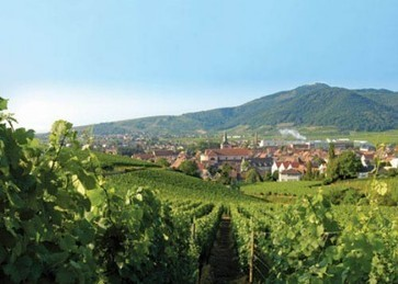 French appellation body considers Alsace Premier Cru plan | Grande Passione | Scoop.it