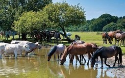 Protect Your Horse From Leptospirosis   Racing Business   Scoop.it