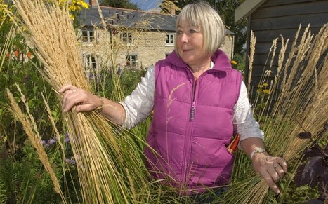 Old wives' tales about gardening: so which are true? - Telegraph | Organic seeds | Scoop.it