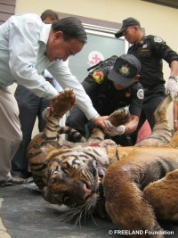 Bail Refused to Wildlife Traffickers | Wildlife Trafficking: Who Does it? Allows it? | Scoop.it
