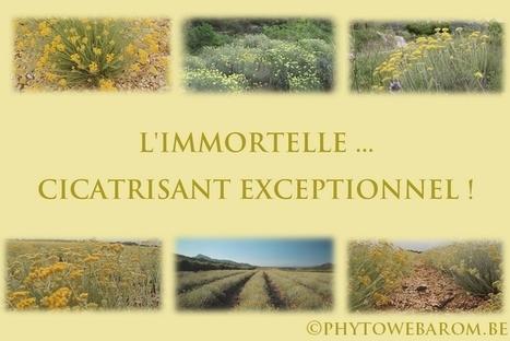 L'IMMORTELLE ... CICATRISANT EXCEPTIONNEL ! - Mon aromathérapie | Cette nature qui nous soigne | Scoop.it