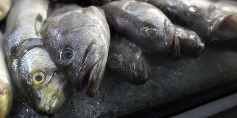 EU To Ban Fish Imports From States Linked To Illegal Trade | Barriers to Trade | Scoop.it