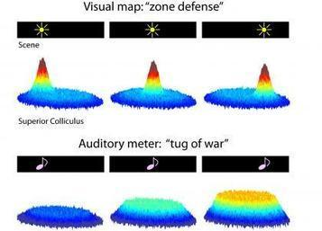 How Vision Captures Sound Now Somewhat Uncertain | Duke Today Mobile | Neuroscience in the news | Scoop.it