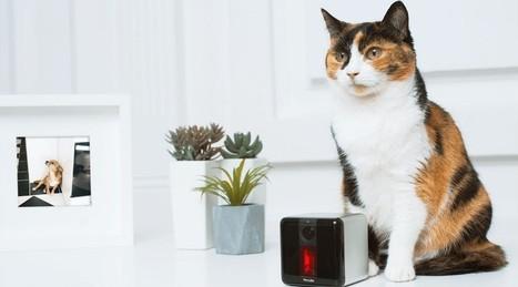 Objets connectés pour animaux: utile ou futile? | Quantified Pet | Scoop.it