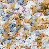 Proof Positive It's Time to Ban Plastic Bags | EcoWatch | Scoop.it