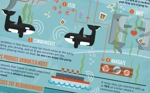 The Secret to a Sound Ocean | green infographics | Scoop.it