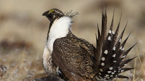 A third of US birds 'in decline' | Broad Canvas | Scoop.it
