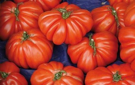 Guida agli usi alternativi del pomodoro - anticalcare naturale, pomodoro, pulire l'ottone, punture d'insetti | PULIRE NATURALE | Scoop.it