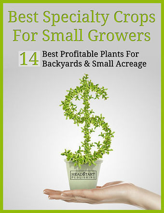 10 Most Profitable Specialty Crops to Grow | International Business Development | Scoop.it