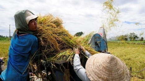 Agriculture & Irrigation Programme » Mekong River Commission | A. | Scoop.it