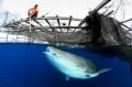 Les merveilles du monde sous-marin en 20 photos | Esprit libre | Scoop.it