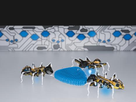 Robots inspirados en la naturaleza | Experiencias educativas en las aulas del siglo XXI | Scoop.it