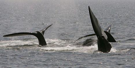 La haute mer, un no man's land en quête de lois | responsabilité humaine | Scoop.it