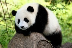 Panda 4.1: What does this update mean for your website?   Starpoint Digital   Scoop.it