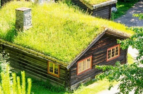 Top 10 Plants for a Living Roof | Green & Eco-Friendly | Scoop.it