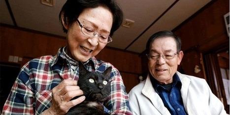 Trois ans après, il retrouve son chat | CaniCatNews-actualité | Scoop.it