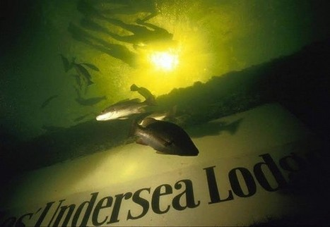 Educators aim to set record for living underwater - Naples Daily News | Undersea Exploration | Scoop.it