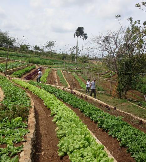 Organic Cuban family farm grows into a model | sustainablity | Scoop.it
