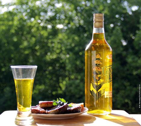 La gentiane, la boisson de l'Aubrac | L'info tourisme en Aveyron | Scoop.it