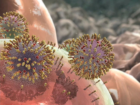 Flu Attack! How A Virus Invades Your Body : NPR | Microorganisms | Scoop.it